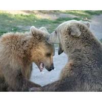 Bear hugs: The new hostile takeover