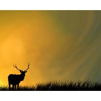 The Pricing Propheteer: The deer now have guns