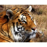 Taming the tigers: Asian tourism's two-way street