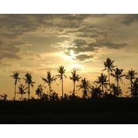 Indonesia: business opportunities in the land next door