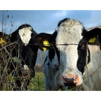 How innovation revitalised a dairy company
