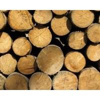 Smoking Gunn: John Gay and the timber giant's rise and fall