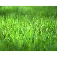 Why the grass isn't greener in another industry