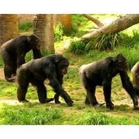Monkeying around at Rio Tinto