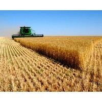 Nufarm loses Roundup license: Does your license deal have these two critical clauses?