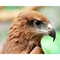 Why leaders need eagle eyes