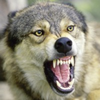 Will the TPP feed consumers to the wolves of Wall Street?