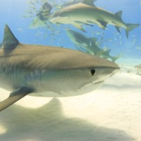 How to stay safe from the property sharks