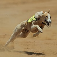 Greyhound racing sponsors abandon the industry: Lessons in disassociating your brand