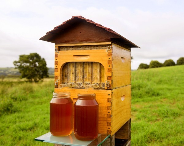 Aussie beekeeper entrepreneurs set record for the most money ever raised on Indiegogo