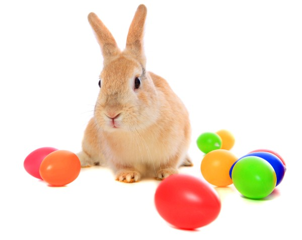 Hotel owners say they'd be bunnies to stay open over Easter, as penalty rates put the bite on small businesses