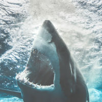Business valuations: Don't bait the shark