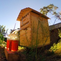 Record-breaking Aussie beekeeper entrepreneurs return to Indiegogo as production begins in Queensland