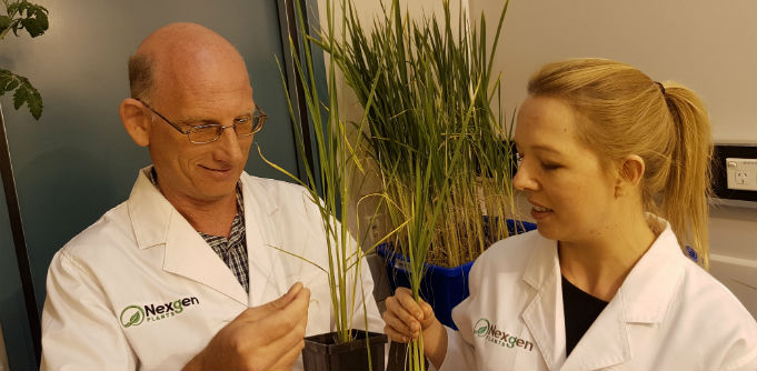 NexGen Plants founder Peer Schenke with researcher Lara-Simone Pretorius. Source: Supplied.