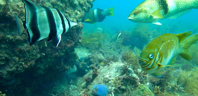 AusOcean