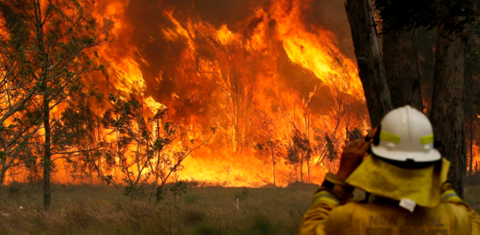 bushfires small business