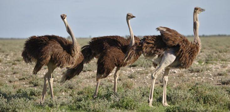 ostrich effect