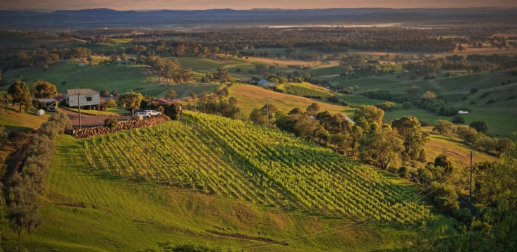 Barossa-vineyards