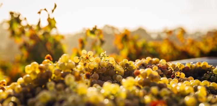 Australian-wine-exports