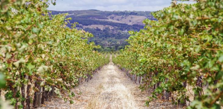 Aussie wineries