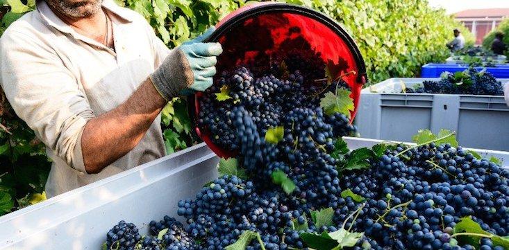 fruit pickers minimum wage