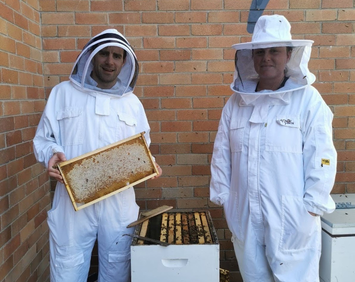 Canva bees